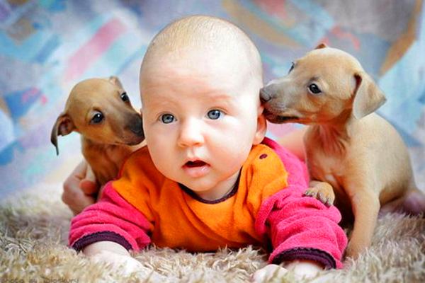 дитина та тварини